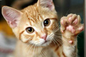 gatos cristal gateras
