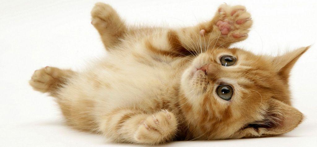 cristal puertas para gatos climalit
